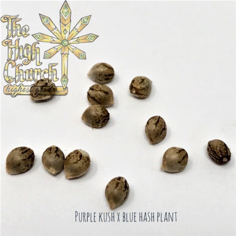 Purple Hash Plant Seeds