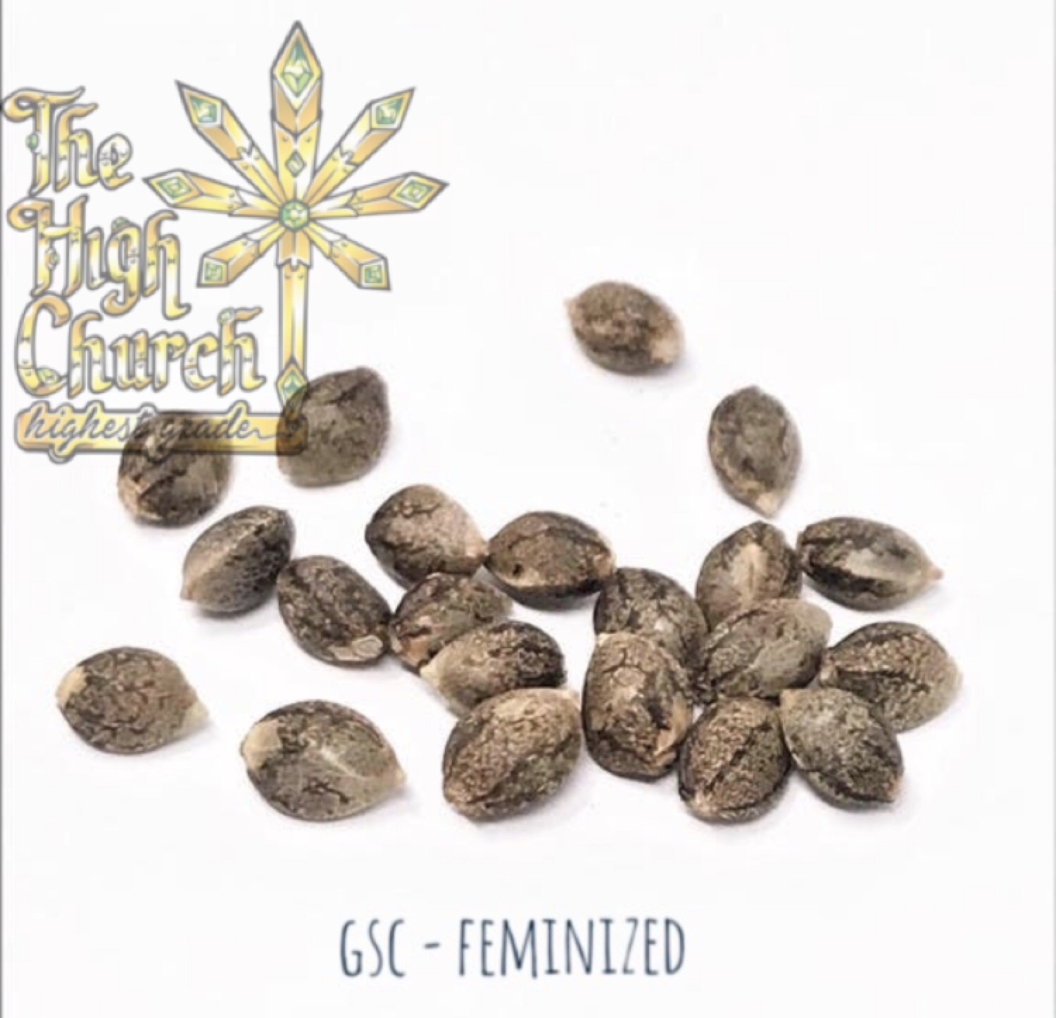 Girl Scout Cookies - Feminized Seeds